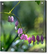 The Light In Our Bleeding Hearts Acrylic Print