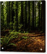 The Light In The Forest No. 2 Acrylic Print