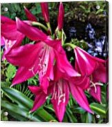 The Lilies Of Summer Acrylic Print