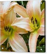 The Lillies Have It Acrylic Print
