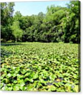 The Lily Pond #1 Acrylic Print