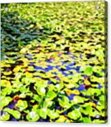 The Lily Pond #2 Acrylic Print