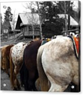 The Line Up Acrylic Print by Barry C Donovan