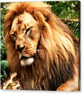 The Lion And The Mouse Acrylic Print