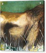 The Lion Acrylic Print by Anthony Burks Sr