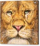 The Lion Roar Of Freedom Acrylic Print