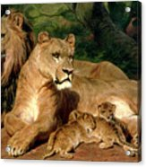 The Lions At Home Acrylic Print
