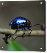 The Little Bug In The Rain Acrylic Print