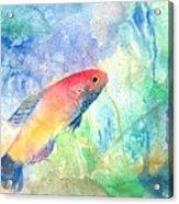 The Little Fish Acrylic Print