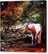 The Little Pink Unicorn By Pedro Cardona Acrylic Print