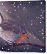 The Little Robin At The Night Acrylic Print