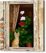 The Little Tuscan Tiger Acrylic Print by Bob Nolin