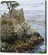 The Lone Cypress - California Acrylic Print by Brendan Reals