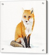 The Lone Fox Acrylic Print