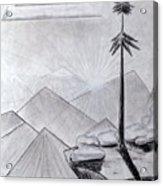 The Lone Pine Acrylic Print