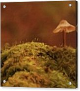 The Lonely Mushroom Acrylic Print