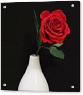 The Lonely Red Rose Acrylic Print