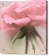 The Lonesome Rose Acrylic Print