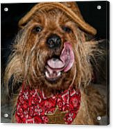 The Long Tongue Of The Law Acrylic Print