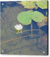 The Lotus Acrylic Print