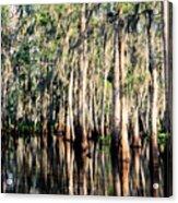 The Louisiana Bayou Acrylic Print