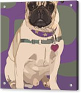 The Love Pug Acrylic Print by Kris Hackleman