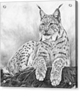 The Lynx 2017 Version Acrylic Print