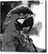 The Macaw Acrylic Print