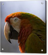 The Macaw Portrait Acrylic Print