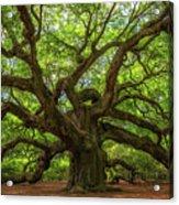 The Magical Angel Oak Tree Panorama  Acrylic Print
