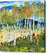The Magical Aspen Forest Acrylic Print by Christy Woodland