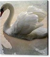 The Magical Swan  Acrylic Print
