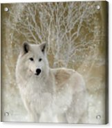 The Magical Wolf Acrylic Print