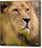 The Magnificent Cat Acrylic Print