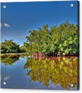 The Mangrove Coast Acrylic Print