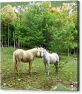 The Mares Watch Acrylic Print
