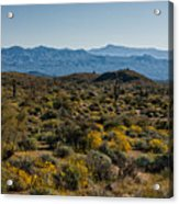 The Mcdowell Mountains Acrylic Print