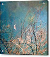 The Messy House Of The Moon Acrylic Print