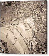 The Mighty Birch Tree  Acrylic Print