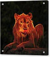 The Mighty Lion Acrylic Print