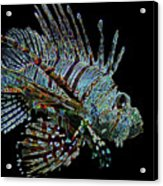 The Mighty Lion Fish Acrylic Print