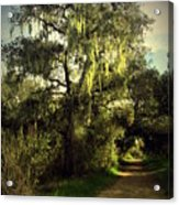 The Mighty Oaks Of Garland Ranch Park 2 Acrylic Print