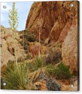 The Mighty Yucca Acrylic Print