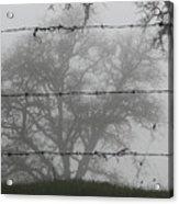 The Mist -- Oak Tree Behind Barbed Wire On Mt. Hamilton, California Acrylic Print