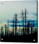 The Morning Burn Acrylic Print