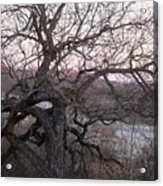 The Mother Tree One Acrylic Print