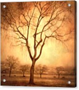 The Mother Tree Acrylic Print