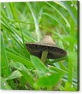 The Mushroom Acrylic Print