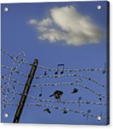 The Musical Barbed Wire Birds Acrylic Print
