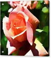 The Name Of A Rose Is Beauty Acrylic Print